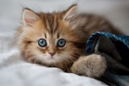 Котенок с джинсами лежит
