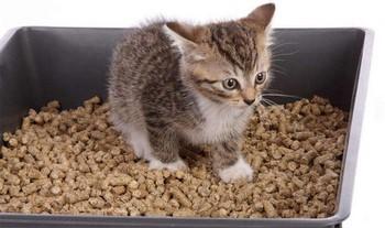 Котенок сидит в лотке с древесным наполнителем