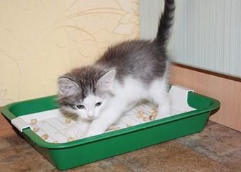 Котенок закапывает в лотке