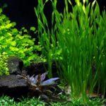 Красивые растения в аквариуме