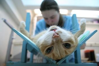 Операция у кота
