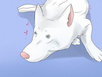 Рисунок белой собаки