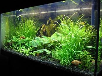 Зеленый красивый аквариум