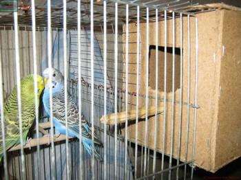 Деревянный домик для волнистых попугаев