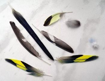 Разные выпавшие перья