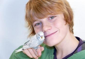 Рыжий мальчик и волнистый попугай