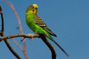 Зеленый попугай сидит на ветке