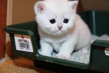 Грустный белый котенок сидит в лотке