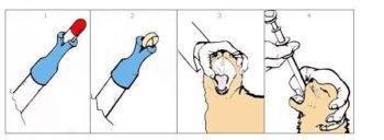 Как дать коту таблетку с помощью специального таблеткодавателя