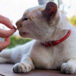 Кот нюхает таблетку