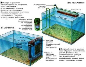Какие фильтры нужны в аквариуме