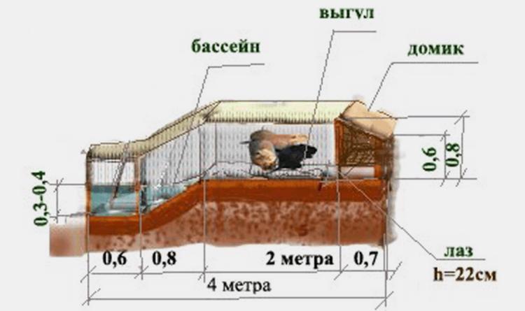 Чертеж наземной клетки для нутрий