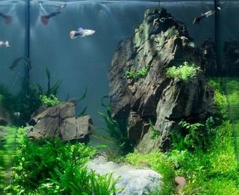 Красивый аквариум с рыбками