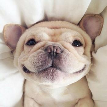 Прикольный щенок улыбается