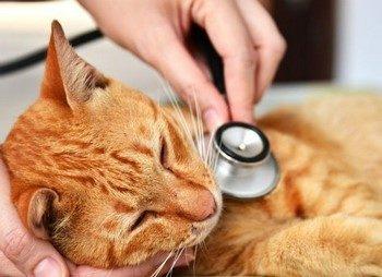 Рыжий кот болеет