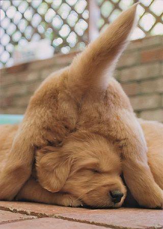 Смешной щенок