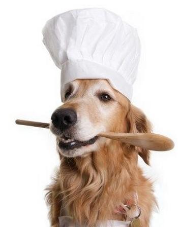 Собака повар