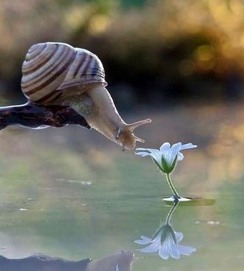 Улитка тянется к цветку