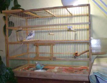 Вариант большой клетки для волнистого попугая