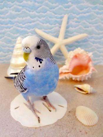 Волнистый попугай среди морской атрибутики