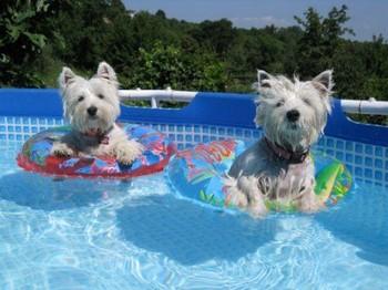 Два веста купаются в бассейне на кругах