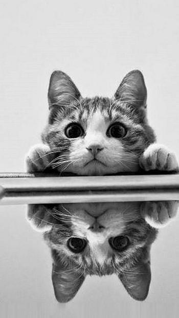 Кот выглядывает из-под стола