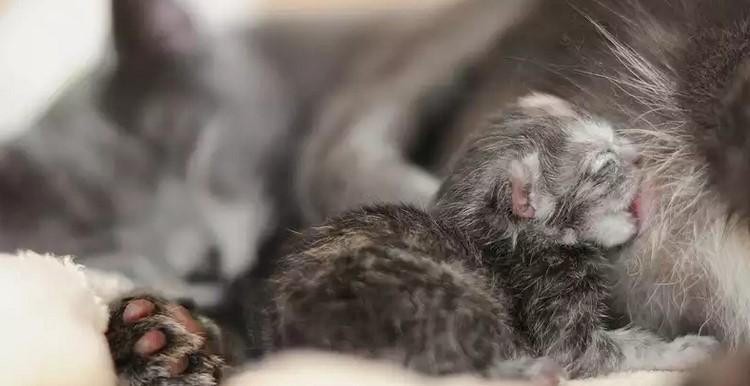 Котенок есть молоко у кошки