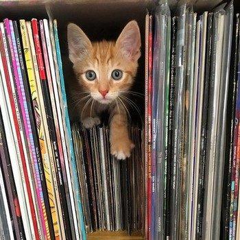Котенок среди виниловых пластинок