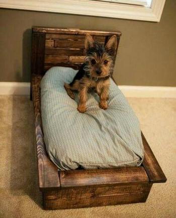 Маленький йорк на своей маленькой кроватке