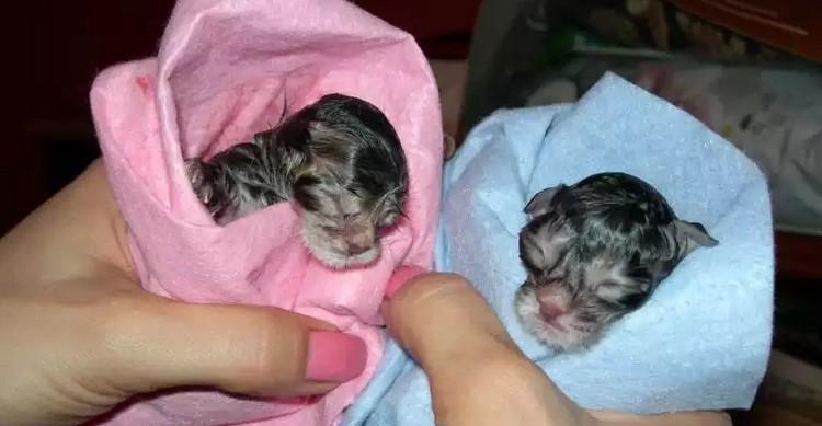Новорожденные котят в конвертиках