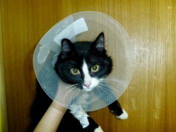 Кот в воротнике лампе