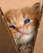 Котенок смотрит из коробки