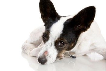 чем вылечить стригущий лишай у собаки