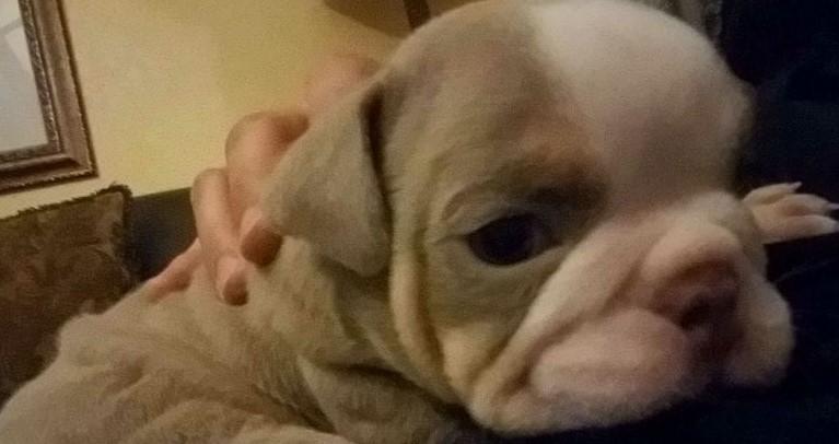 Совсем маленький щенок