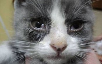 Кот с больными глазами
