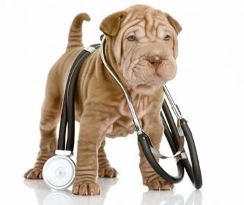 Маленький щенок и фонендоскоп