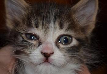 У котенка больные глаза