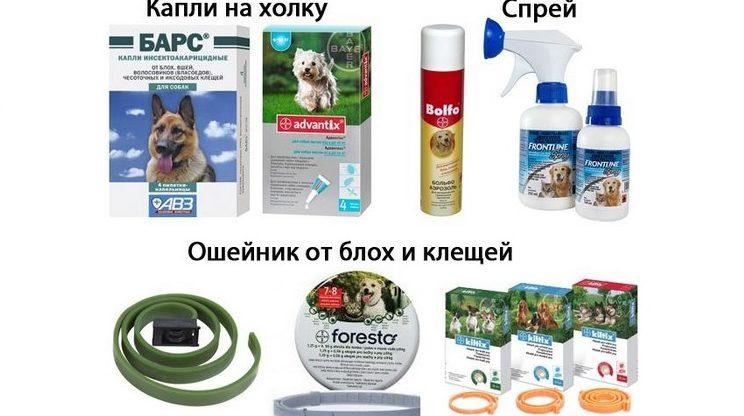 Эффективные средства от клещей для собак