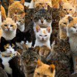 Много разных котов