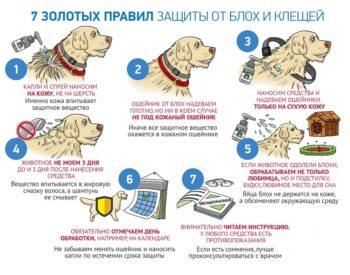 Правила защиты собаки от клеща