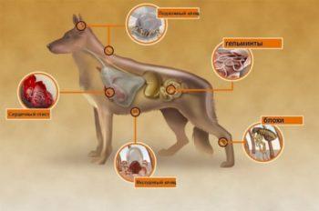 Виды паразитов у собак