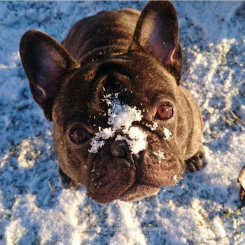 Француз в снегу