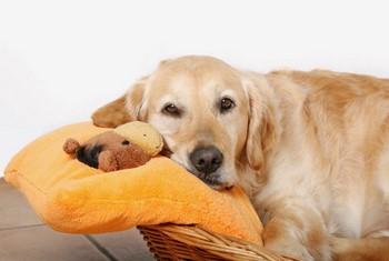 Уставшая собака