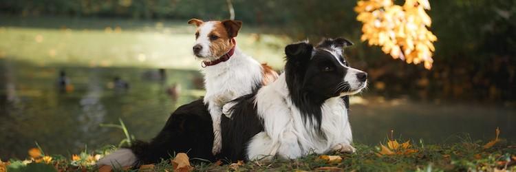 Две собаки на полянке