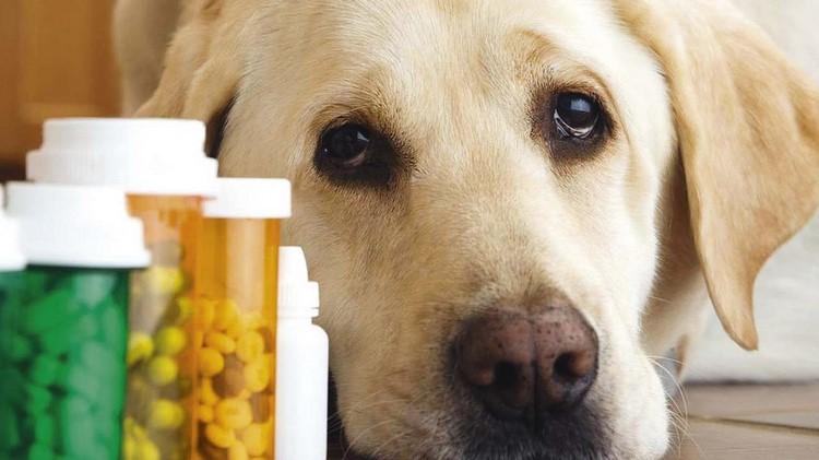 Грустный пес и лекарства