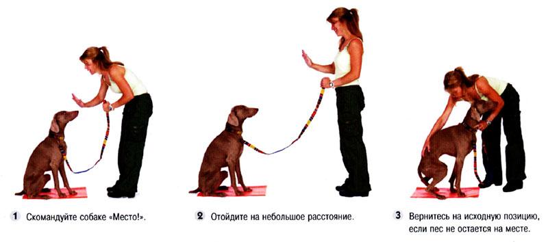 Как научить собаку интересным командам