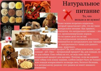 О натуральном питании собак