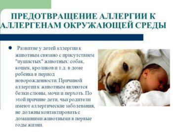 Об аллергии на собак