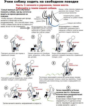 Обучение ходьбе на свободном поводке