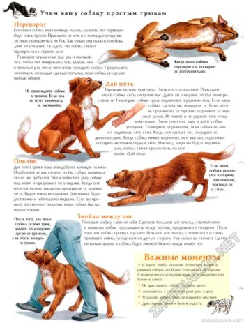Обучение собаки трюкам
